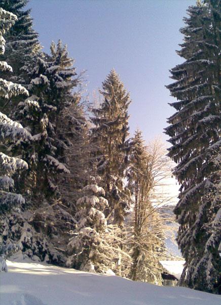 auf langen skiern